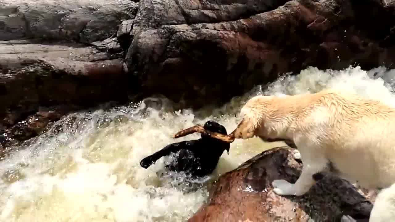 Dog saves friend from drowning! Amazing! 👍 Via: ViralHog -From the owner: