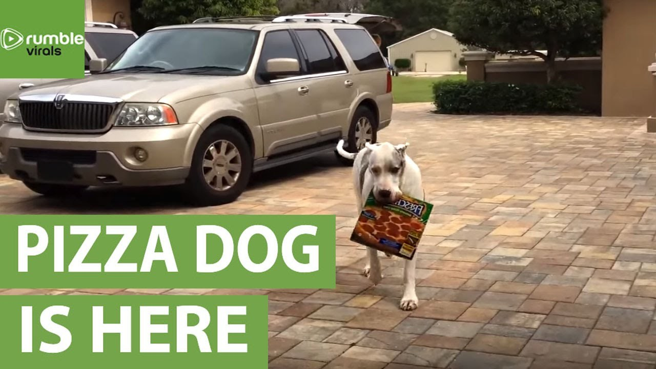Introducing Max the pizza delivery dog