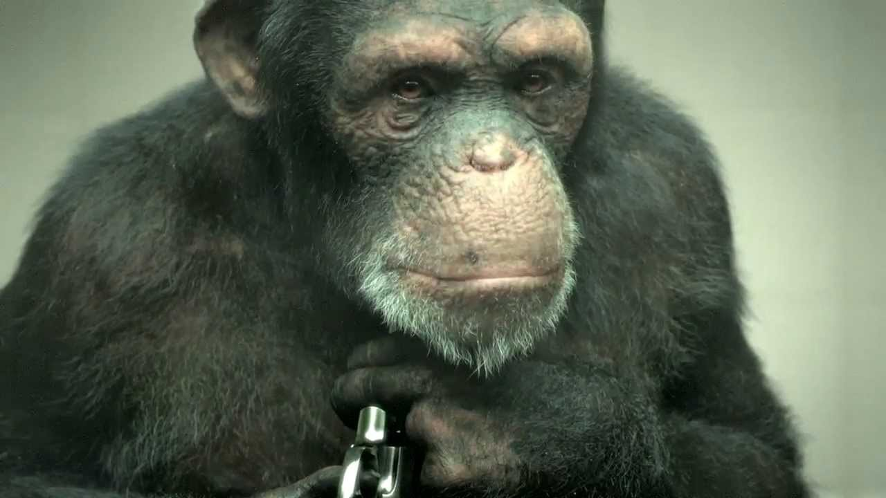 Developing a 100% CGI Chimp for PETA's