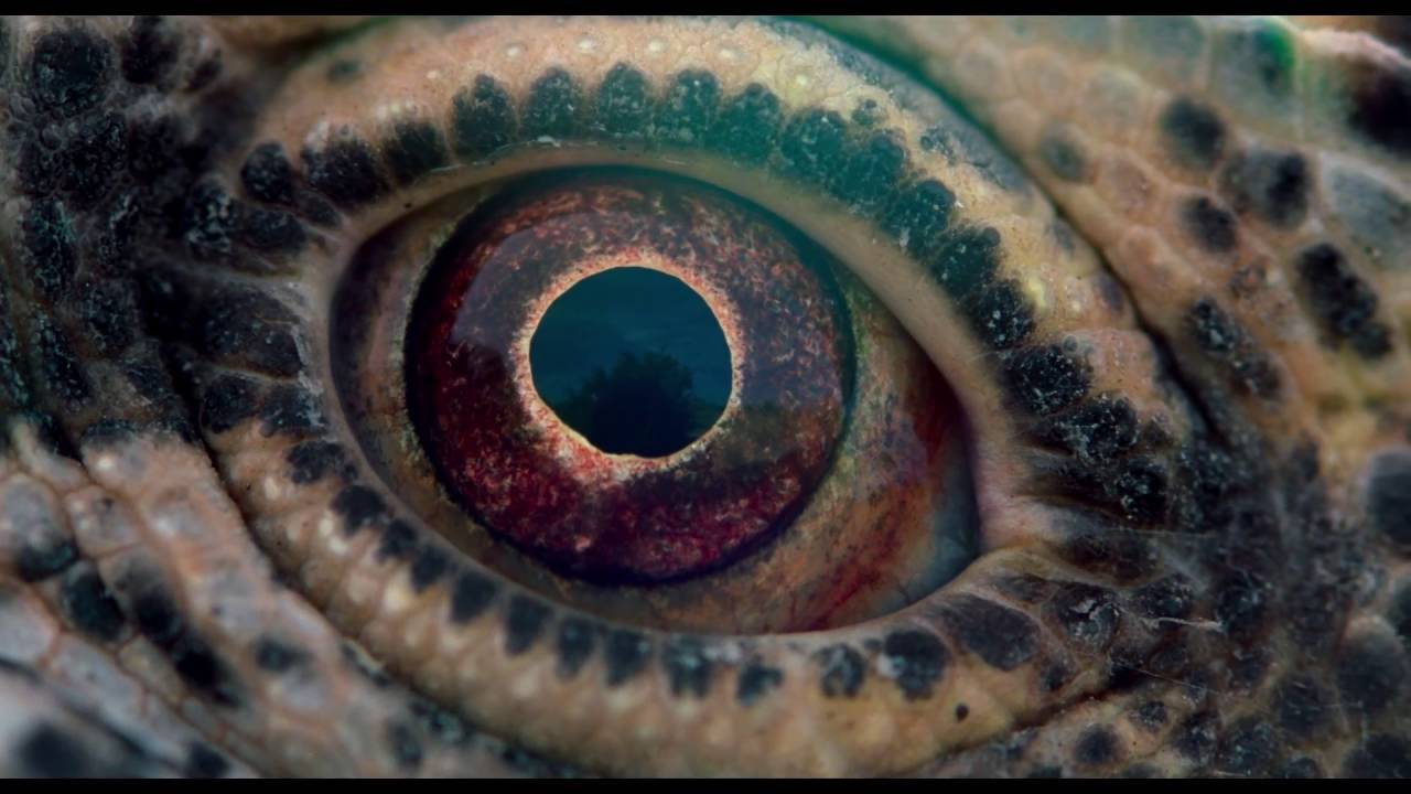 Voyage Of Time: Life's Journey - Trailer